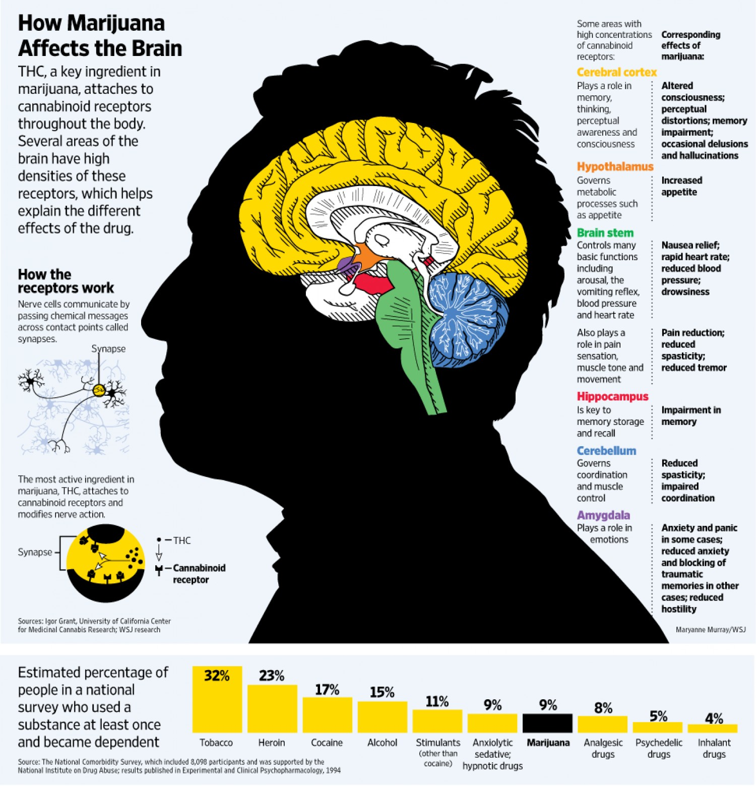 How Marijuana Affects the Brain