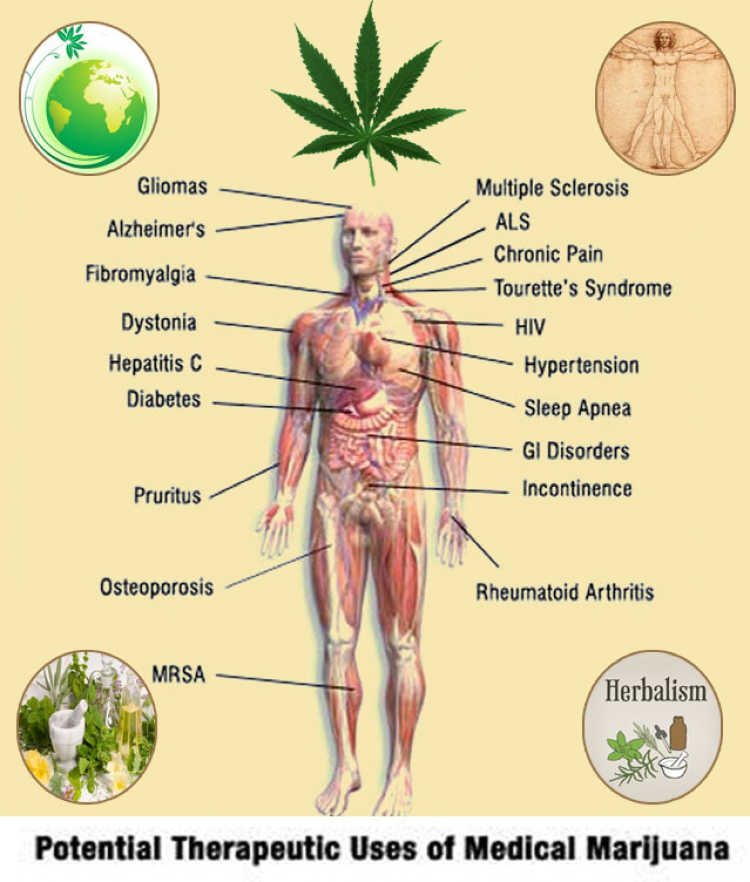 Herbal benefits of medical marijuana. Potential Therapeutic Uses of Medical Marijuana.