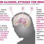 How alcohol attacks the brain? Alcohol affects many body parts and this is how it damages the brain.