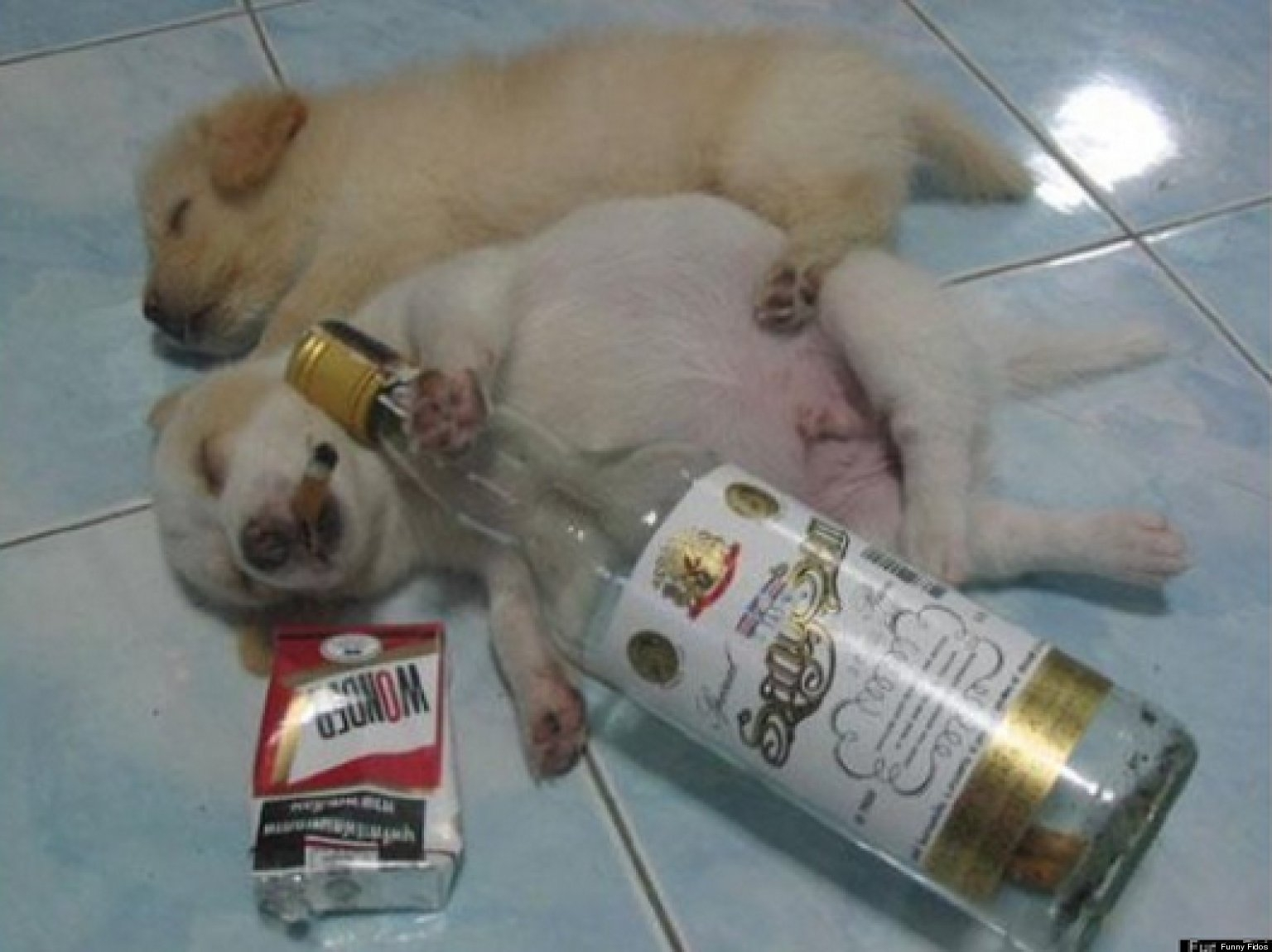 Funny pictures of alcoholics